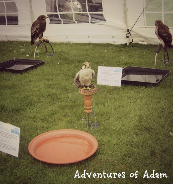 Adventures of Adam East Anglian Game and Country Fair falconry village