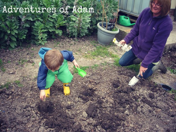 Adventures of Adam potato planting