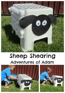 Sheep Shearing Adventures of Adam