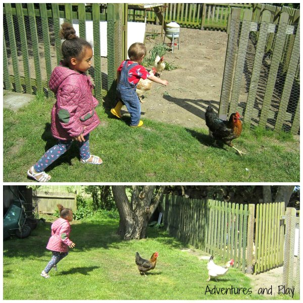 Toddlers and chickens