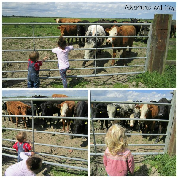 Toddlers and cows