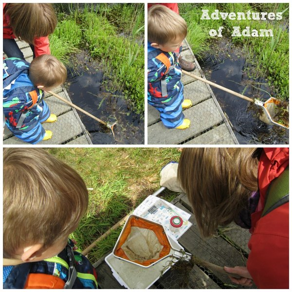 Adventures of Adam toddler pond dipping