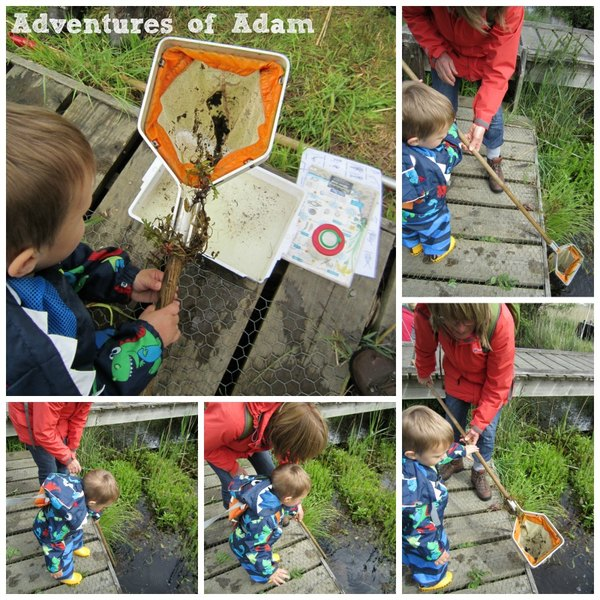 Adventures of Adam more toddler pond dipping