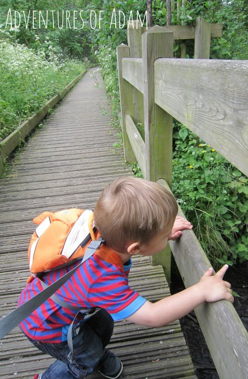 Adventures of Adam Boardwalk Ranworth Broad