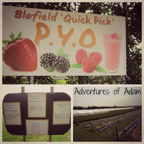 Adventures of Adam Blofield pick your own