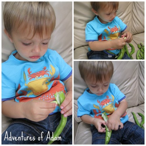 Adventures of Adam toddler fine motor skills broad beans