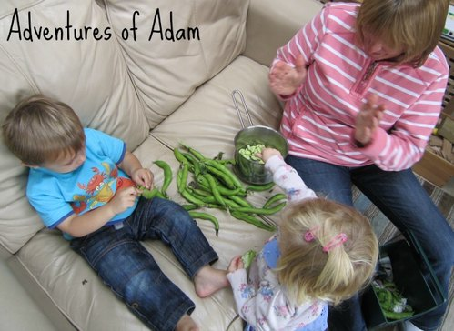 Adventures of Adam toddler broad beans