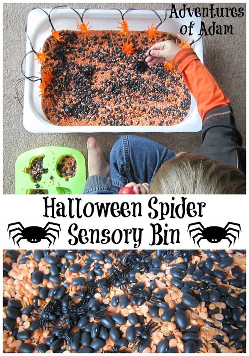 Adventures of Adam Halloween Spider Sensory Bin