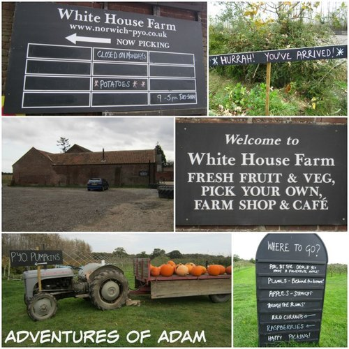 Adventures of Adam White House Farm Norwich