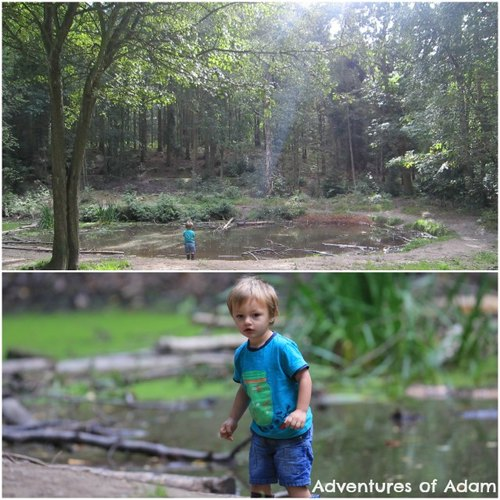 Adventures of Adam Bacton woods pond