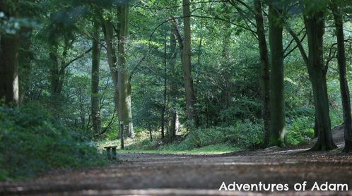 Adventures of Adam Inside Bacton woods