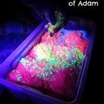 Adventures of Adam Glow in the dark rice