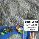 Adventures of Adam Basil Seed Tuff Spot