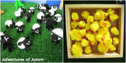 Adventures of Adam Pom pom lambs
