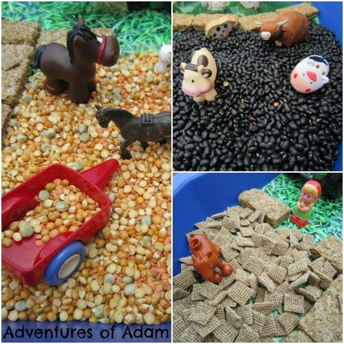 Adventures of Adam Farm sensory bin made from food