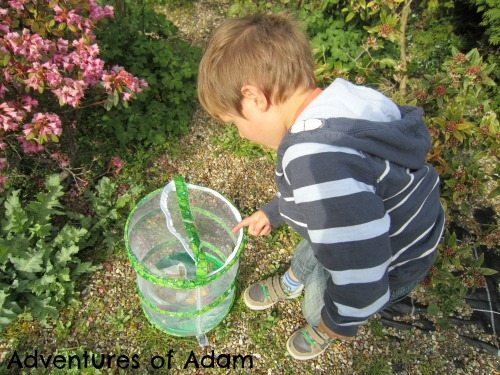 Adventures of Adam Butterfly Garden from Imagido