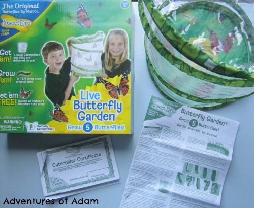 Adventures of Adam Insect Lore Butterfly Garden box contents