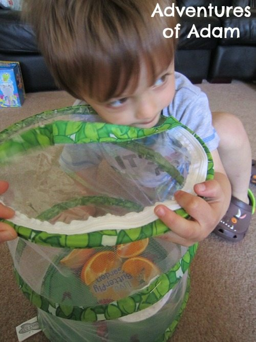 Adventures of Adam Toddler learning about life cycle of a butterfly