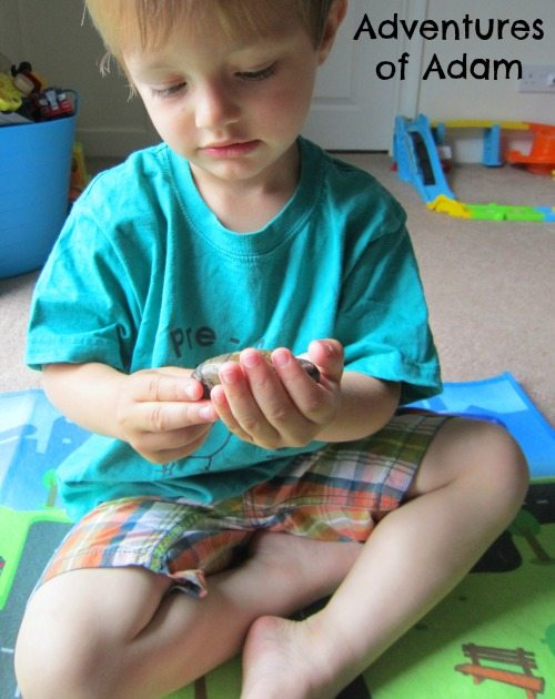 Adventures of Adam Playing with story stones