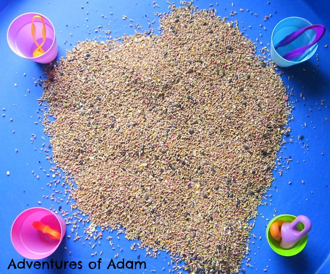 Adventures of Adam Bird Seed Tuff Spot