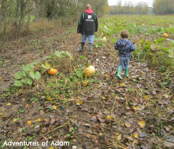 Adventures of Adam Pumpkin Picking Norwich 2015