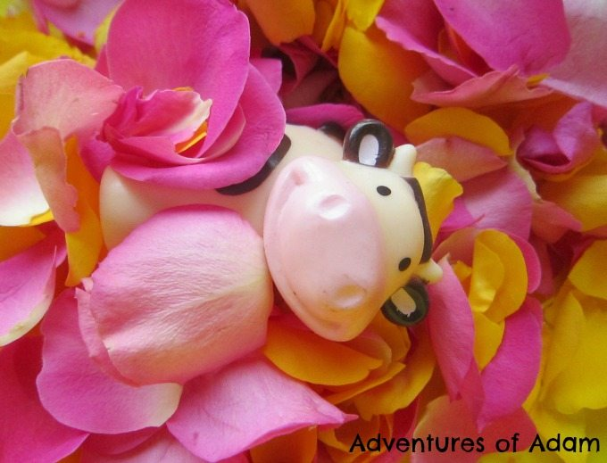 Adventures of Adam Toy cow sleeping on a bed of roses