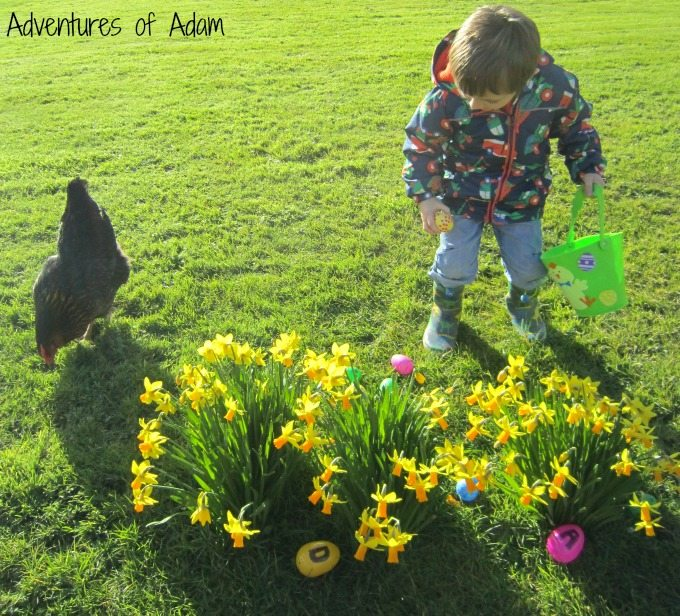 Adam and his chicken on an Easter Egg hunt
