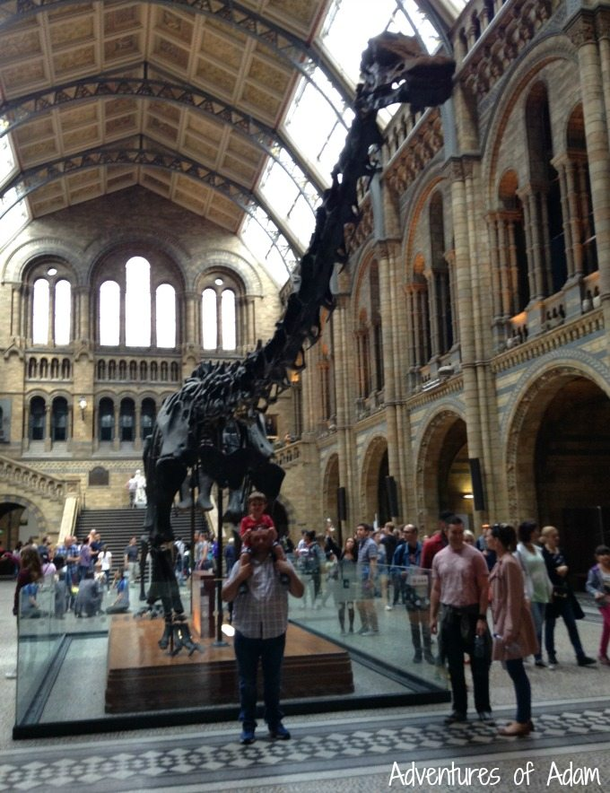 Dippy at The Natural History Museum