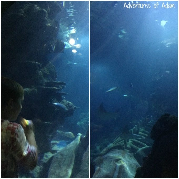 Dive Discovery Zone