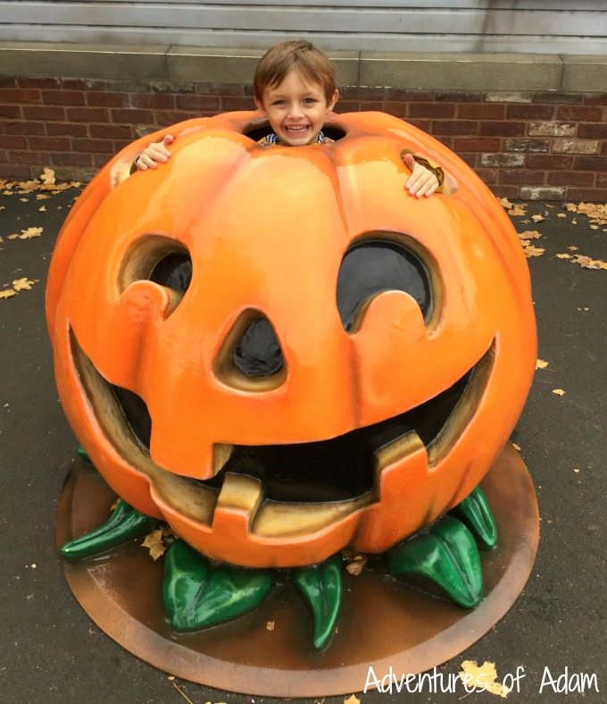 Pumpkins at Drayton Manor