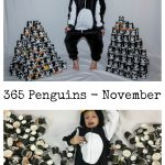 365 Penguins November