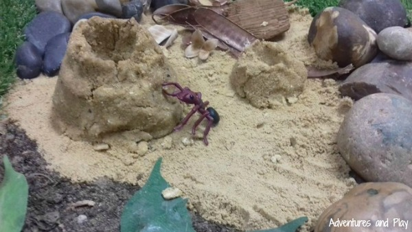 Ant life cycle sensory play
