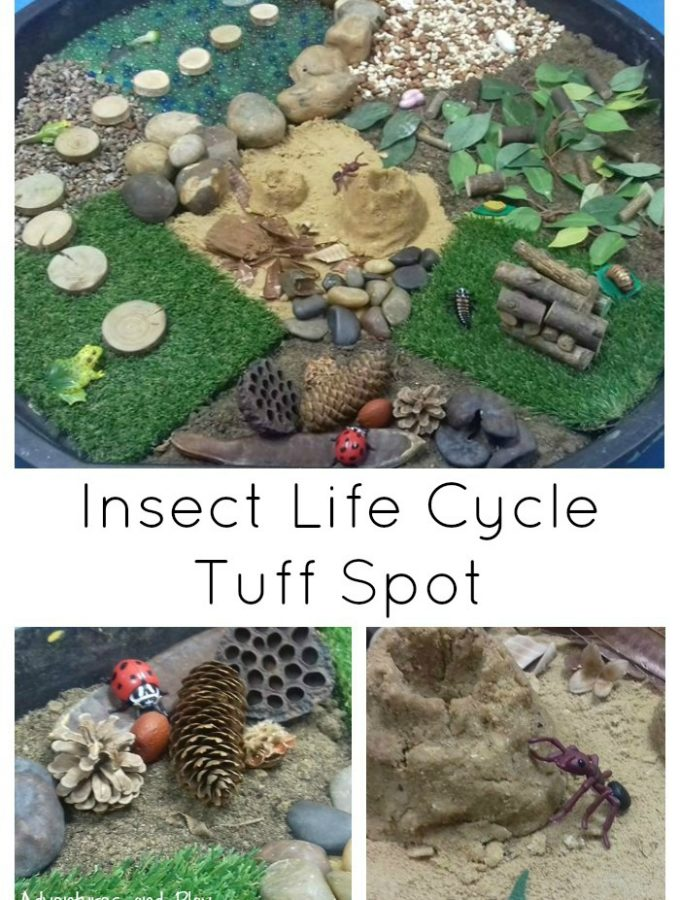 Insect Life Cycle Tuff Spot