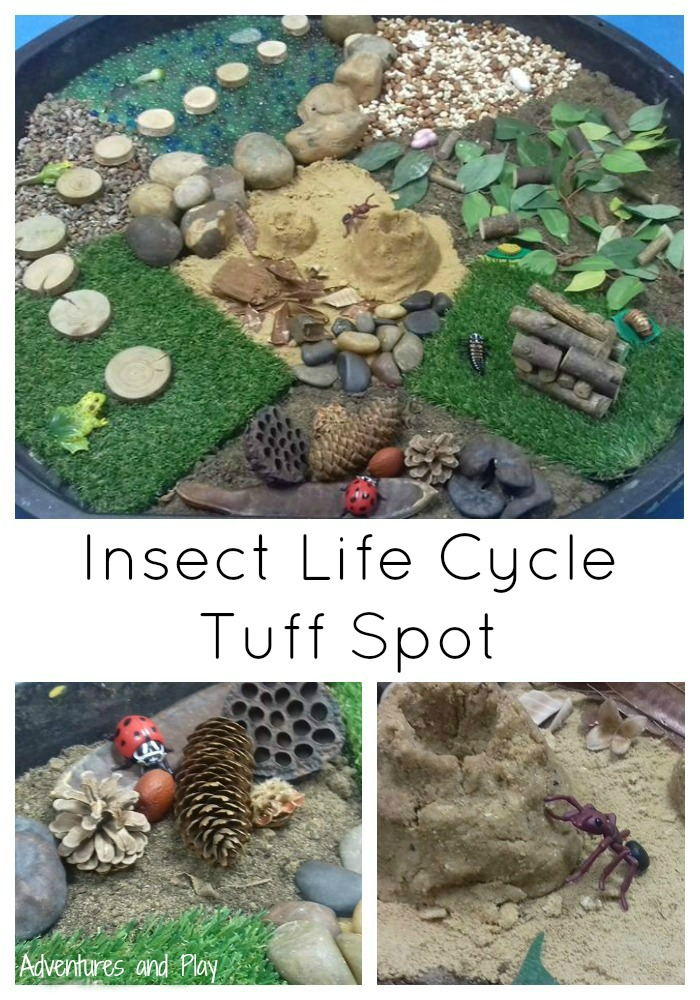 Insect Life Cycle Tuff Spot Sensory Play