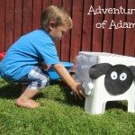 Adventures of Adam toddler sheep shearing